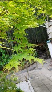 鎌倉散策 報告寺 竹林