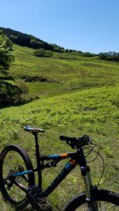 新緑の香りたっぷりな細野高原