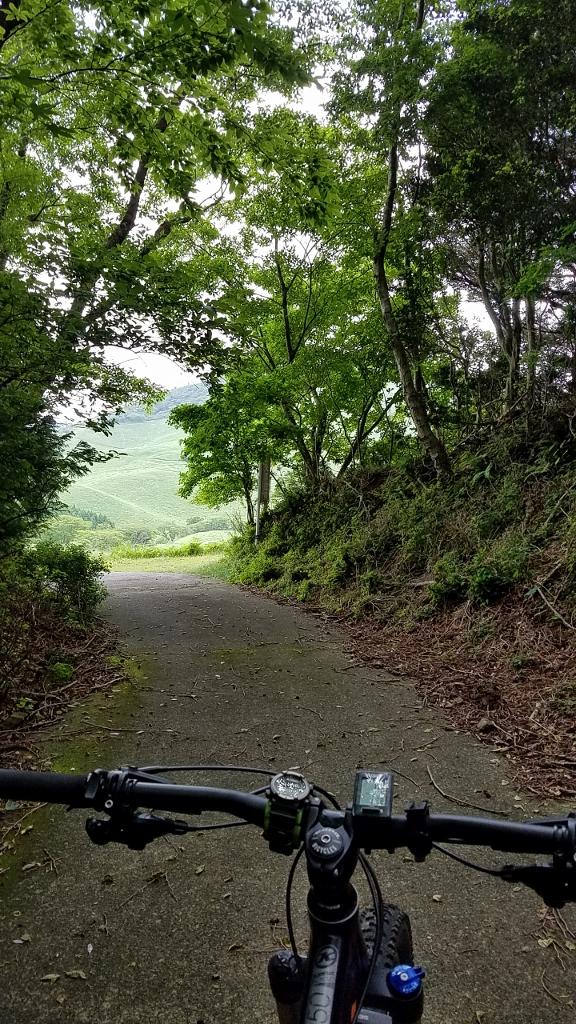 薄暗い林から望む新緑の細野高原!