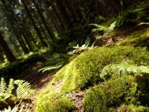 MTB 森の中 苔