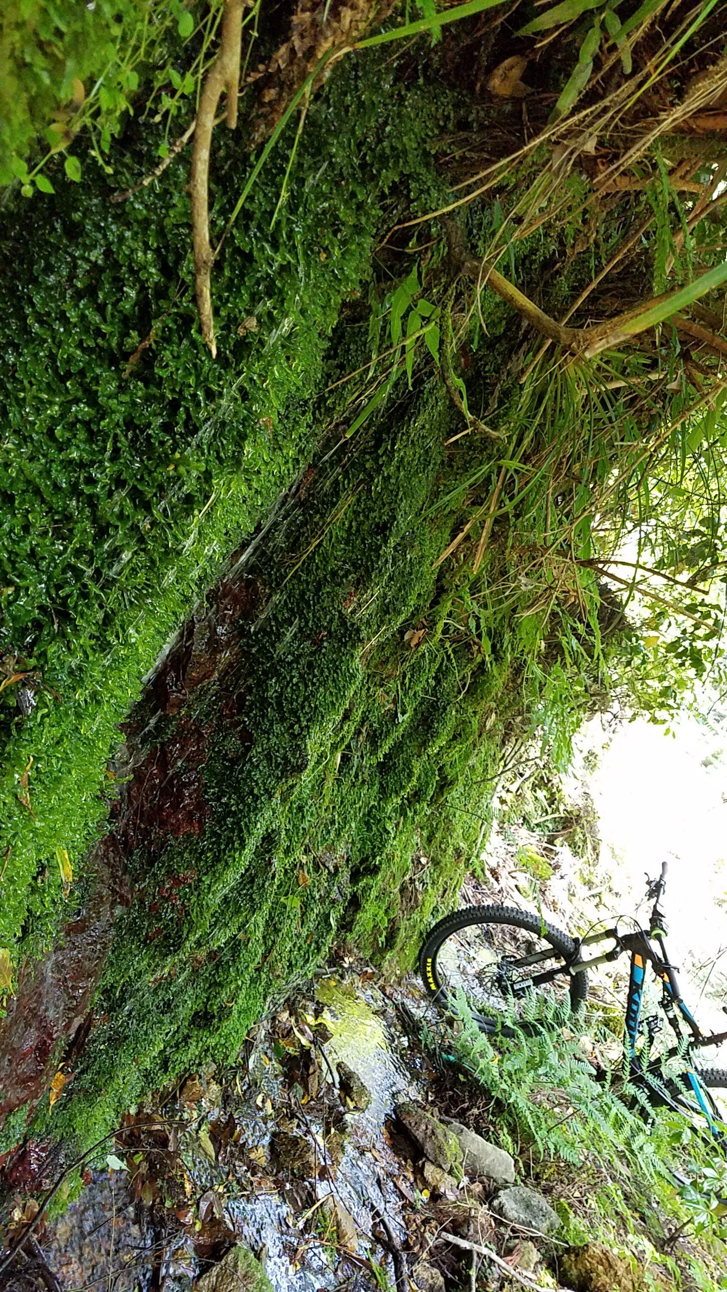 梅雨間の晴れ!林道Ride